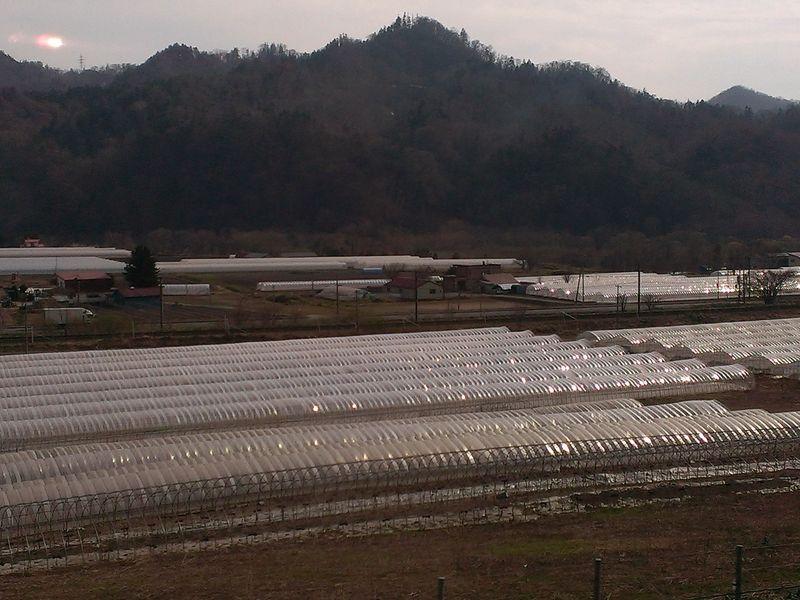 20140430 15 Yubari melon farm (10)